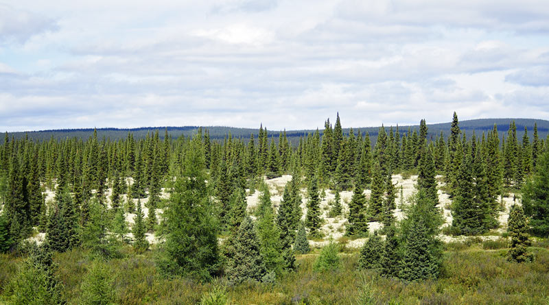 View of the land along the Labrador Highway.